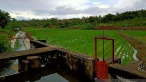 Saluran irigasi pertanian di Belitung